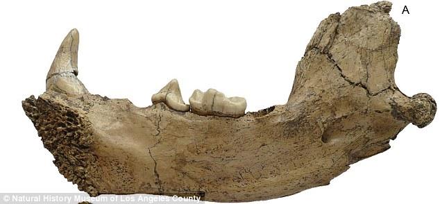 کشف فسیل 6 میلیون ساله در چین