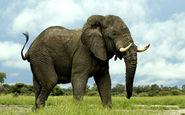 رفتار جالب فیل حامی طبیعت در مواجهه با زباله + فیلم