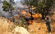 حبس و مجازات نقدی در انتطار عاملان آتشسوزی در جنگلها
