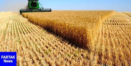 رتبه نخست خوزستان در تولید گندم در 7 سال گذشته