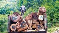 رئیس انجمن جنگلبانی ایران: «قاچاق چوب» را پررنگ جلوه می دهند
