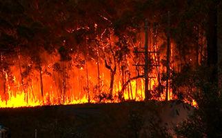 گستردهترین آتش سوزی جنگلهای سوئد در ۱۲ سال اخیر + فیلم