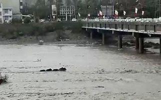 گرفتار شدن گرازها در رودخانه میناب + فیلم