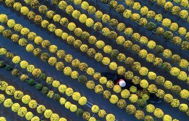 عکس منتخب نشنال جئوگرافیک   گل های سال نو