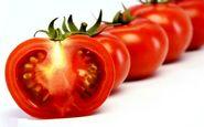 عوارض رگه های سفید گوجه فرنگی