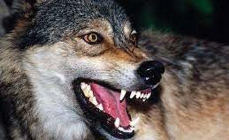 چالدران در وحشت/ حمله خونین گرگهای گرسنه