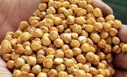 واردات بیرویه با ارز دولتی و ممنوعیت صادرات، نخود ایرانی را به انزوا کشانده است