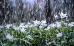 بارش ها از ابتدای سال تا دیروز 80 درصد بیشتر از نرمال است
