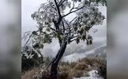 اولین بارش برف در تاریخ هاوایی را ببینید