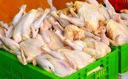 آخرین نوسانات قیمت مرغ در بازار