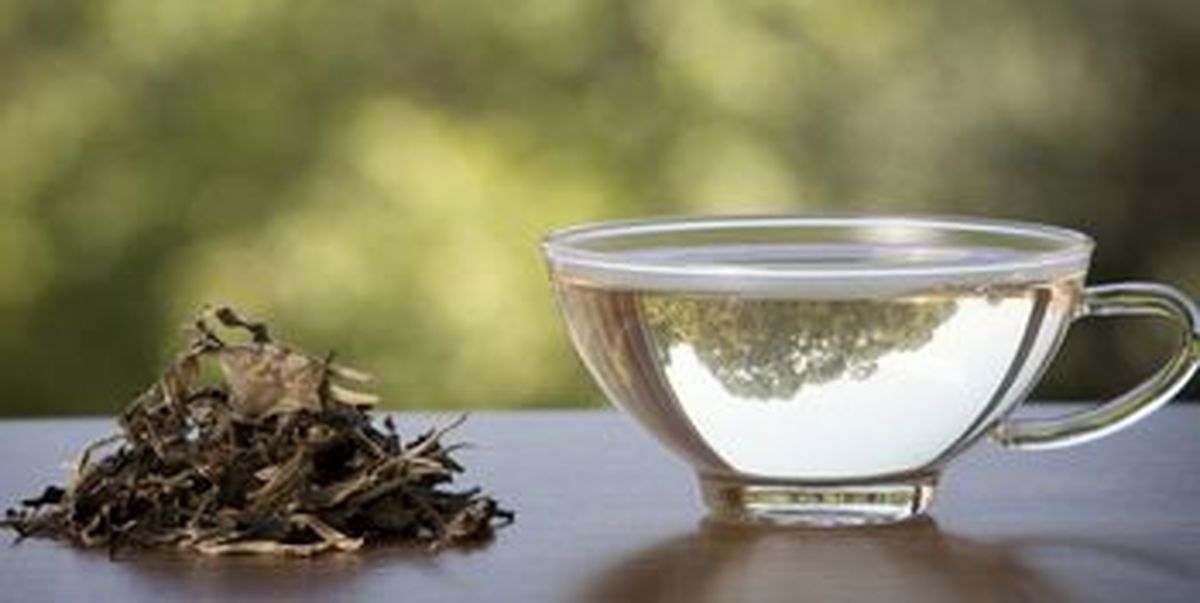 چای و خاصیتی ویژه برای سالمندان