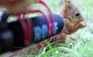 صدای ضبط شده از سنجاب هنگام غذا خوردن