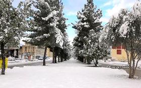 بارش برف غافلگیرکننده در یاسوج + فیلم