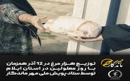 توزیع ۱۰۰۰ عدد مرغ توسط ستاد پویش مهرماندگار