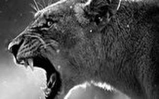حمله وحشتناک شیر خشمگین به یک مرد در خانه!