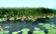 تالاب بین المللی امیرکلایه، تالابی با تنوع زیستی بالا