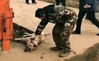 کشتار سگ و گربه ها در روستایی در چین برای جلوگیری از شیوع کرونا