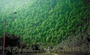 نمک آبرود از مقاصد اصلی طبیعت گردی ایران