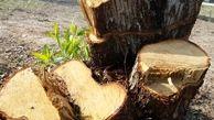 ماجرای قطع چند درخت از سوی آموزش و پرورش خراسانرضوی چه بود؟
