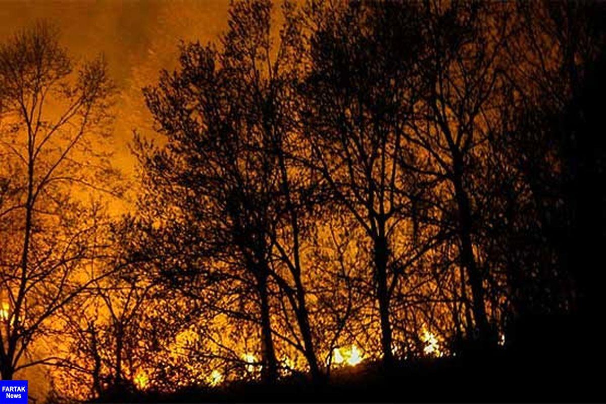 حریق در جنگل های گیلان/ خطر منازل را تهدید نمیکند