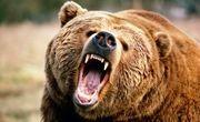 از حمله خرس در ارتفاعات تنکابن تا سقوط مرگبار در کیاسر
