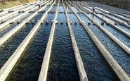 پیشبینی تولید ۲۴ هزار تن آبزی در کرمانشاه طی سال ۹۹