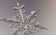 فردی که از دانههای برف عکس میگیرد +فیلم