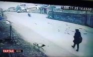 حمله سگ ولگرد به دختر + فیلم