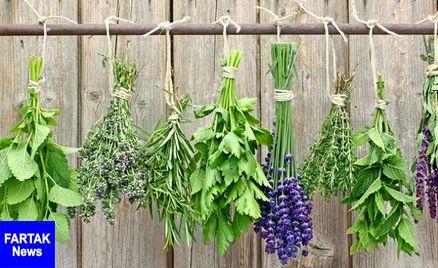 با این گیاهان خون تان را تصفیه کنید
