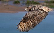 ۶ گونه حیوان در حال انقراض در چهارمحال و بختیاری زیست میکنند