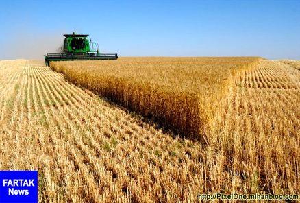 قیمت فروش گندم تعیین شد