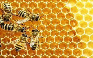 توانایی های شگفت انگیز زنبور عسل + فیلم