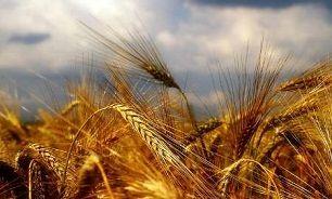 عرضه محصولات کشاورزی در بورس کالا عاملی برای شفافیت قیمت