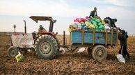 قیمت سیب زمینی از هفته آینده در مدار کاهشی قرار میگیرد