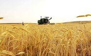 مدیر جهاد کشاورزی اندیمشک: ۱۹۴ هکتار از گندمزارهای اندیمشک طعمه حریق شدند
