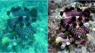 ابداع الگوریتمی برای ارتقای وضوح تصاویر ثبت شده از زیر آب