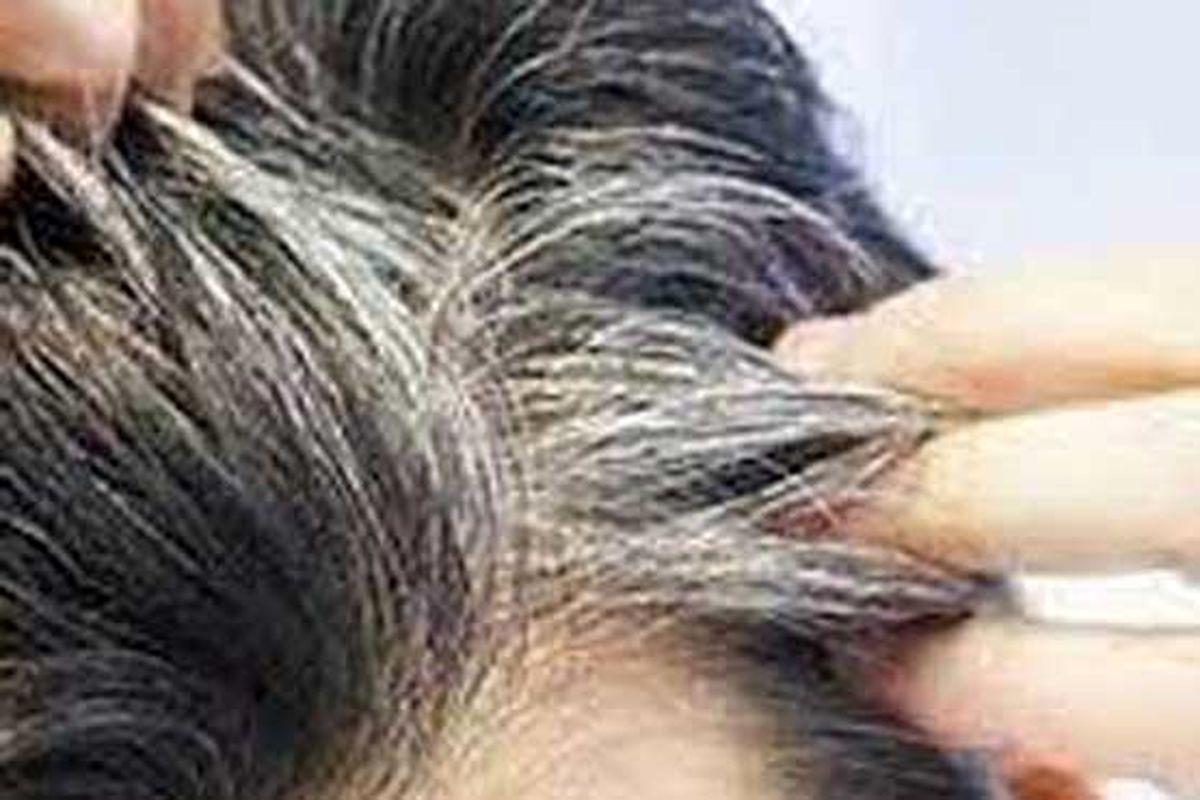 معجون خارق العاده برای سیاه کردن موهای سفید!