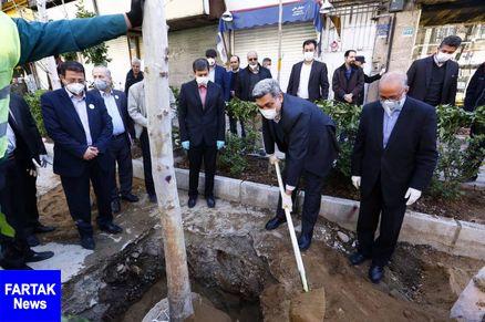 شهردار تهران در خیابان ولیعصر (عج) چنار کاشت