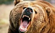 حمله خرس به چوپان کوهرنگی