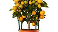این میوه ی محبوب، دندان هایتان را نابود می کند!