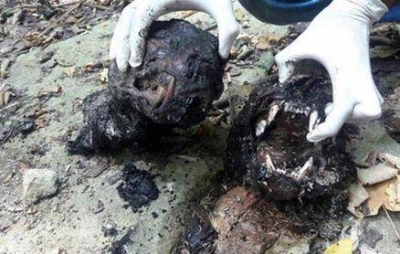 این مردان پلنگ مادر و توله اش را سلاخی کردند و سوزاندند+ عکس