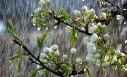 باران بهاری و کاهش 12 درجهای دمای هوا از دوشنبه در گیلان