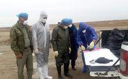 لاشه ۶۰۰۰ قطعه پرنده مهاجر در سواحل بندرترکمن جمع آوری شد
