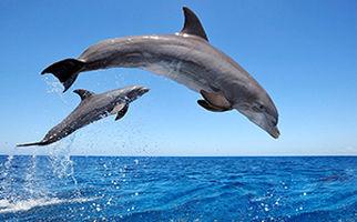 دلفینهایی که منظره زیبای هرمز را چشمنوازتر میکنند