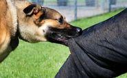 سگ هار جان یک زن گیلانی را گرفت