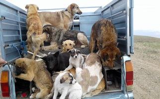 چند سگ در تهران عقیم شدهاند؟ + فیلم
