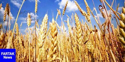 افزایش 3 برابری خرید تضمینی گندم در رامهرمز