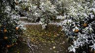 کشاورزان سرمازدگی باغ ها را جدی بگیرند