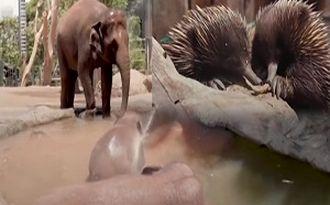 فرار حیوانات باغ وحش تارونگای استرالیا از گرما + فیلم