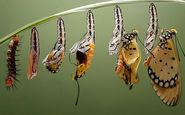 چرخه فوق العاده تماشایی تبدیل کرم ابریشم به پروانه+ فیلم